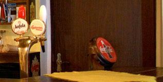 Hollywood Bar - Tradiční kuchyně v Českých Budějovicích FOTO 3